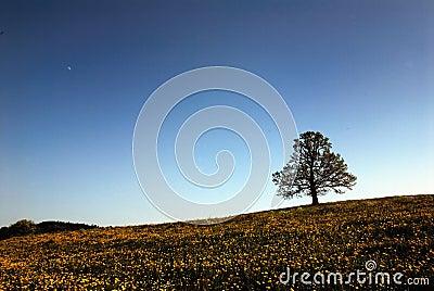 Tree in flower strewn meadow