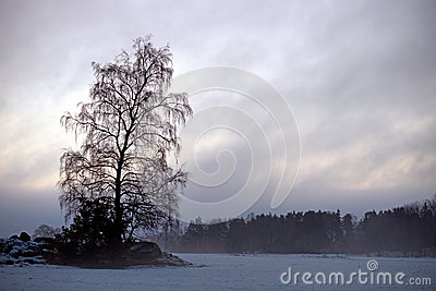 Are tree in foggy landscape