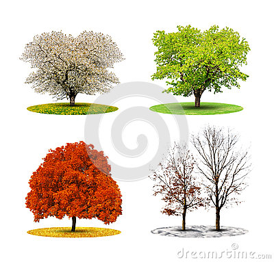 Tree in four season