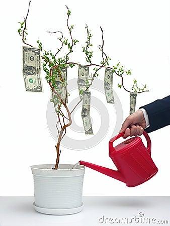 Tree för dollar en