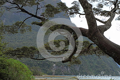 Tree fragment