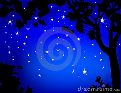 Tree framed Night Stars