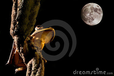 Tree frog amphibian and moon light at night