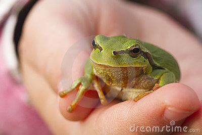 Tree frog on child hand