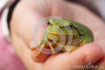Tree frog on child hand