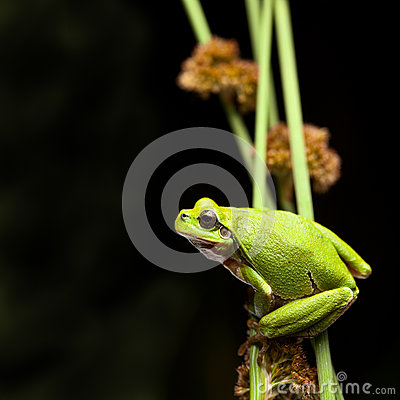 Tree frog crawling
