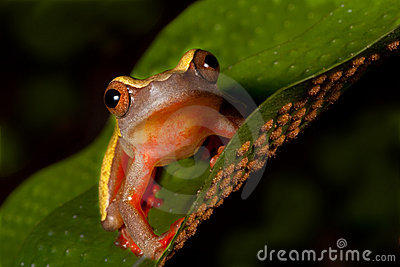 Tree frog cute tropical animal amphibian