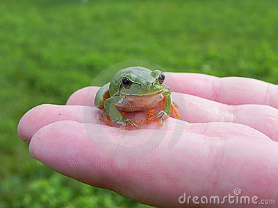 Tree frog on fingers