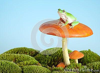 Tree frog on mushroom