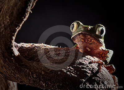 Tree frog at night in jungle moonlight