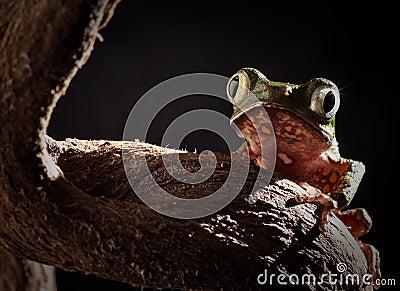 Tree frog at night in jungle moonlight