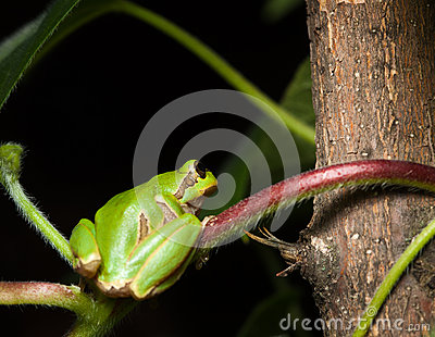 Tree frog sitting on branch