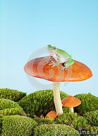 Tree frog on toadstool