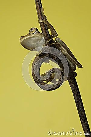 Tree frog tropical rainforest animal amphibian
