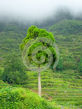 Free Tree From Yunhe Cloud Terrace Stock Photo - 103328910
