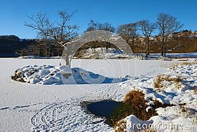 Tree on frozen Rydal Water
