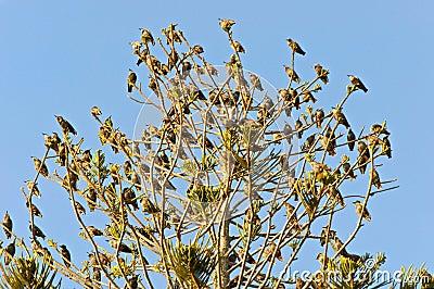 Tree full of birds