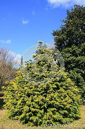 Tree in a garden