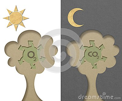 Tree generated oxygen and carbon-dioxide