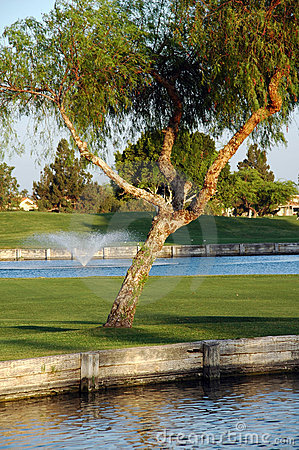 Tree on golf court