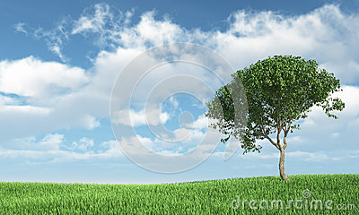 Tree on the grass