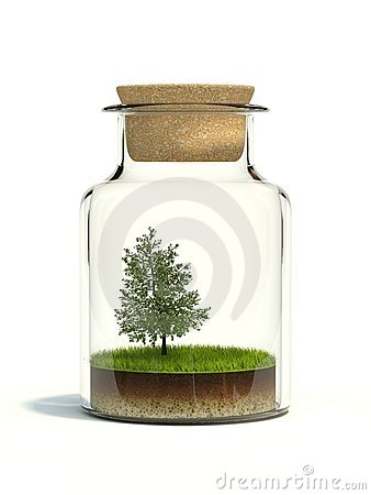 Tree on grass in the bottle