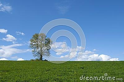 Tree in green field .