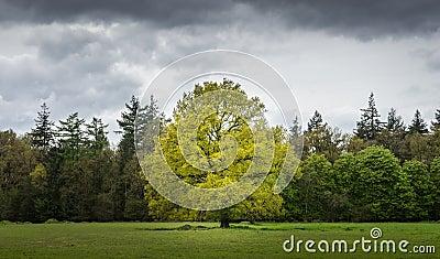 Tree In Green Field Free Public Domain Cc0 Image
