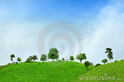 Tree and green field with road and blue sky
