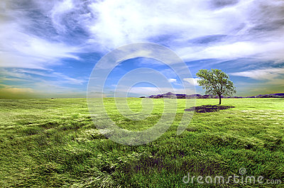 Tree and green fields