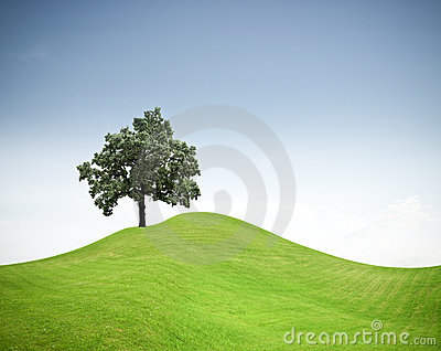 Tree on a green grass hill