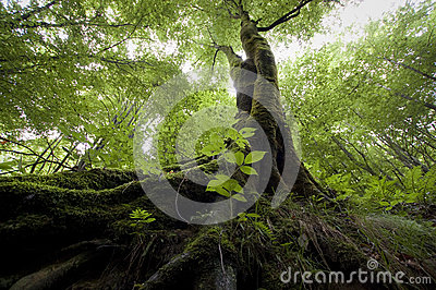 Tree in green jungle