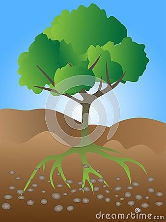 Tree growing