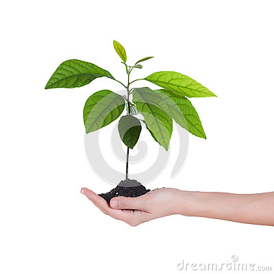 Free Tree Growing In Soil Royalty Free Stock Photo - 27620395