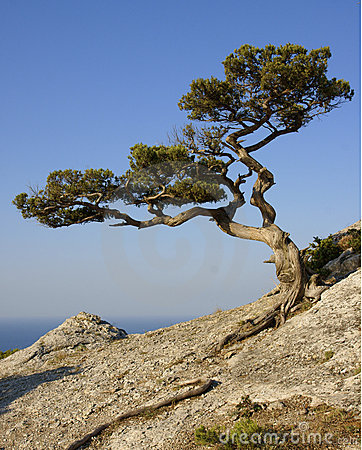 Tree growing on a rock