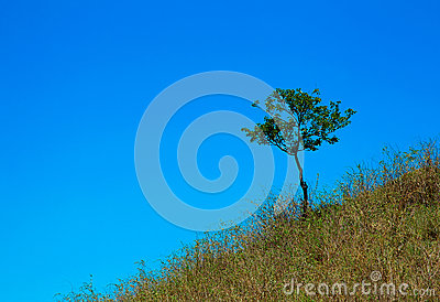 A tree grows on the mountain in the grass