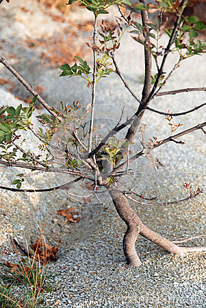 A tree grows in sand