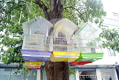 In the tree hanging bird s cage