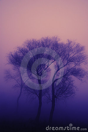 Tree in heavy fog
