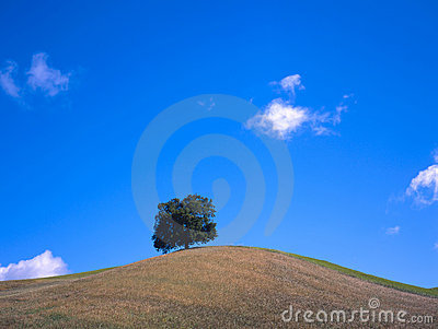 Tree at a hill