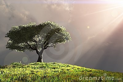 Tree on hill with rays of light