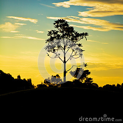 Tree on hill with sunset