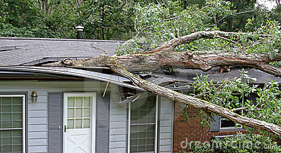 Tree Hits House