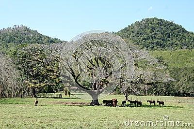 Tree with horses