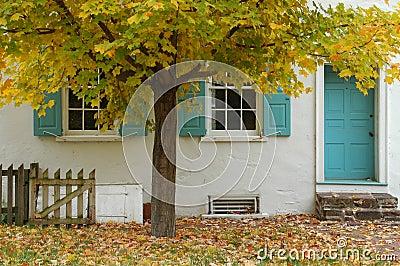 Tree & house