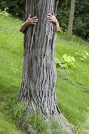 Tree Hugger Environmentalist, Hug Save Environment