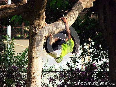 Tree Hung