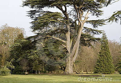 Tree in the Ickworth house garden