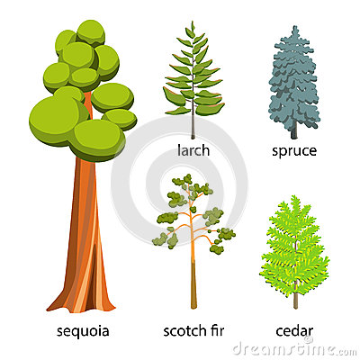 Free Tree Icon Set - Coniferous Trees Cartoon Illustration. Flat Coniferous Trees Collection: Big Sequoia, Spruce, Larch, Scotch Fir An Stock Photos - 71908273