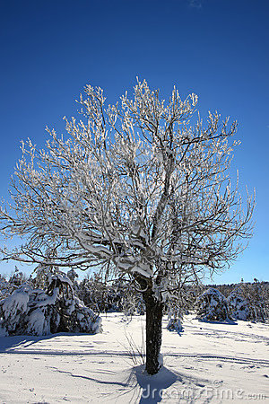 Tree with icy branches